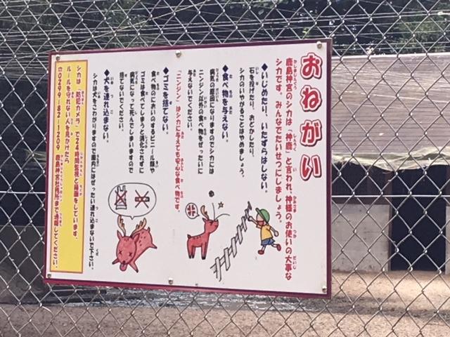 鹿島神宮の鹿にごはんをあげる時の注意