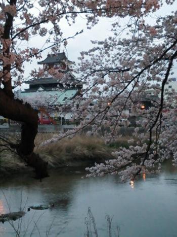 清州城桜の名所