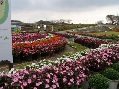 観光農園花ひろばお花摘み