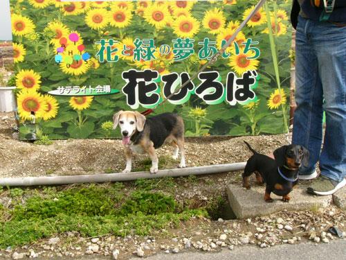 観光農園花ひろばは大型犬も入場できる
