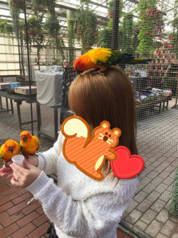富士花鳥園のコガネメキシコインコ