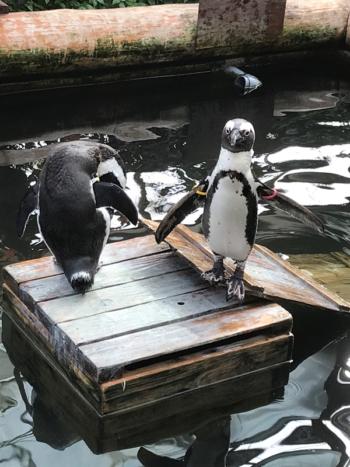 富士花鳥園のペンギン
