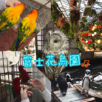富士花鳥園に行ってきました!アクセス、営業時間、見どころなど。