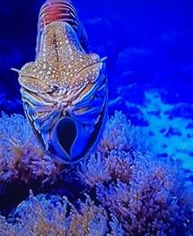 竹島ファンタジー館にいる巨大な貝