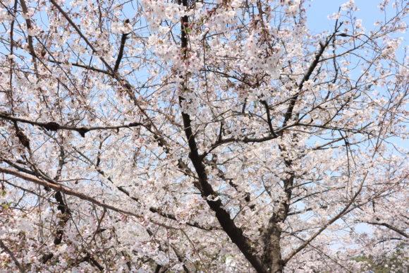 春の浜寺公園